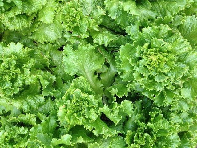 lettuce-381047_640