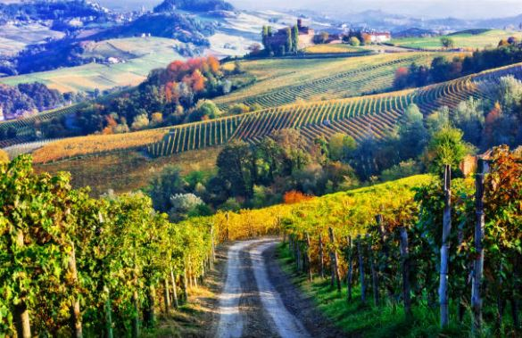 comment choisir le vin & comprendre son étiquette