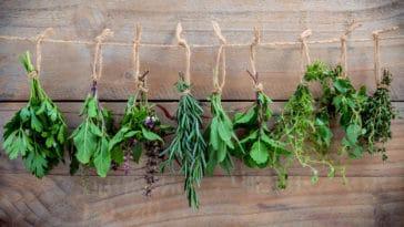 conserver herbes aromatiques