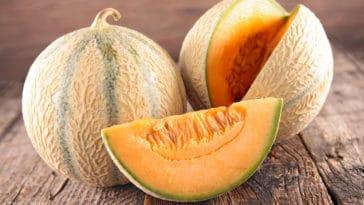 recettes melon