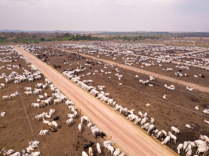 Quels sont les impacts de la viande sur l'environnement ?
